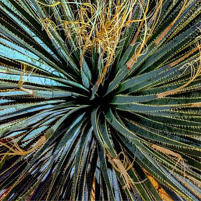 Photograph - Yucca Yucca by Stan  Magnan