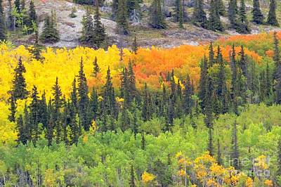 Photograph - Yukon Autumn by Frank Townsley