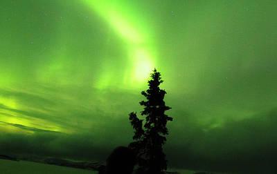 Photograph - Yukon Norhern Lights P8 by Phyllis Spoor