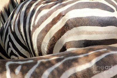 Photograph - Z Stripes by Alycia Christine