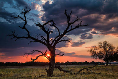 Photograph - Zambia Sunset by Fran Gallogly