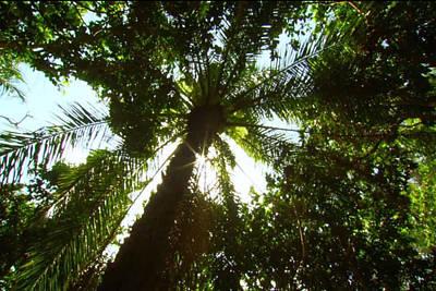 Mixed Media - Zanzibar Island Coconut Tree 85 Degree Sky Facing Photography Of The Green Umbrella Pattern Of Branc by Navin Joshi