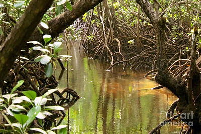 Photograph - Zanzibar Island Swamp Marshes Wetlands Vegitation Trees Fish Water Crabs Eggs Habitat  by Navin Joshi