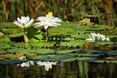 Photograph - Zapata Lilies by David Beebe