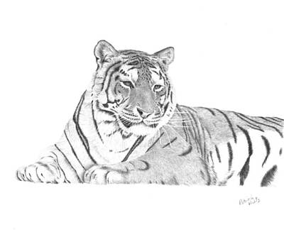 Drawing - Zarina A Siberian Tiger by Patricia Hiltz