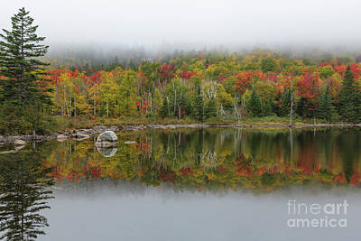 Photograph - Zealand Pond - Bethlehem New Hampshire by Erin Paul Donovan