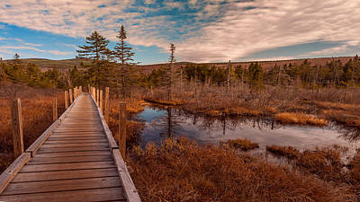 Photograph - Zealand Trail, Bethlehem, Nh by Brenda Jacobs