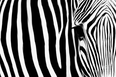 Zebra 032 Original by Gull G