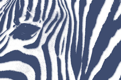 Zebra 2 Art Print by Joe Hamilton