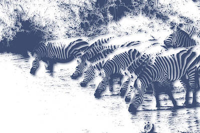 Zebra Photograph - Zebra 3 by Joe Hamilton