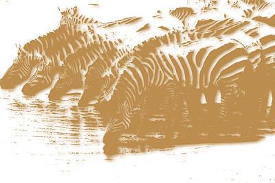 Zebra 5 Art Print by Joe Hamilton