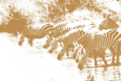 Zebra 6 Art Print by Joe Hamilton