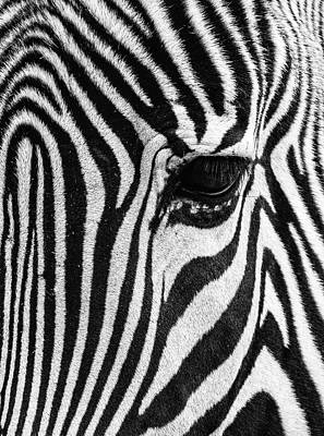 Photograph - Zebra Abstract by Rand