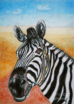Drawing - Zebra Aceo by Yvonne Johnstone