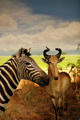 Zebra And Antelope Print by Marilyn Hunt