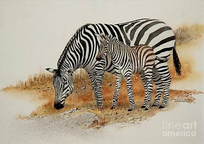 Painting - Zebra And Foal by Frank Townsley