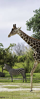 Photograph - Zebra And Giraffe In Tall Format by Les Palenik