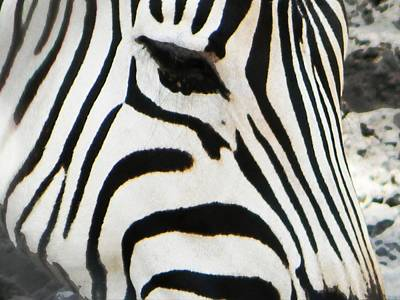 Photograph - Zebra by Andy Jeter