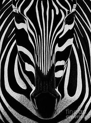 African Gray Painting - Zebra Art 45 by Gull G