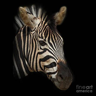 Zebra Art Print by Barbara Dudzinska