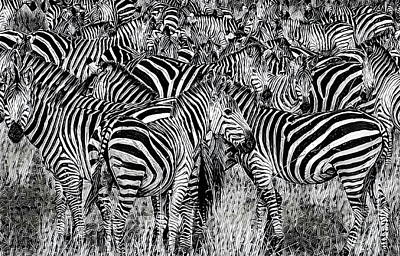 Pack Animal Mixed Media - Zebra - Black And White by Russ Harris
