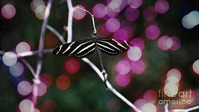 Photograph - Zebra Butterfly  by Paul Wilford