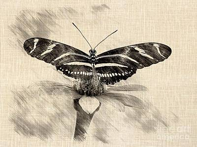 Zebra Butterfly Sketch Art Print