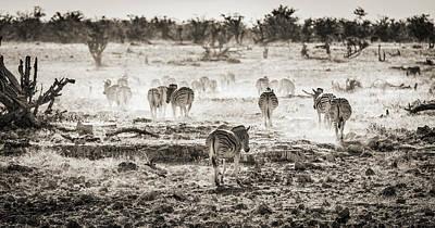 Namibia Photograph - Zebra Butts - Etosha National Park - Namibia by Duane Miller