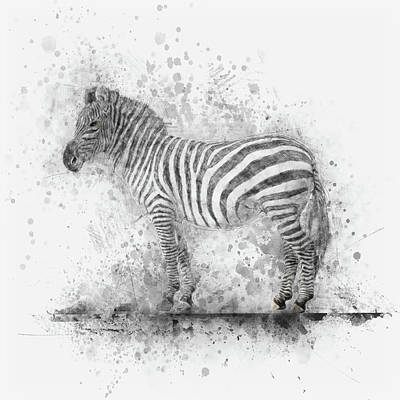 Drawing - Zebra by Christina VanGinkel