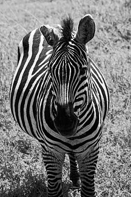 Photograph - Zebra Close-up by Sally Weigand