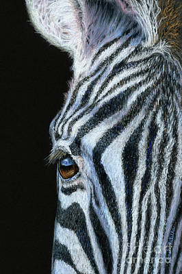 Black Background Painting - Zebra Detail by Sarah Batalka
