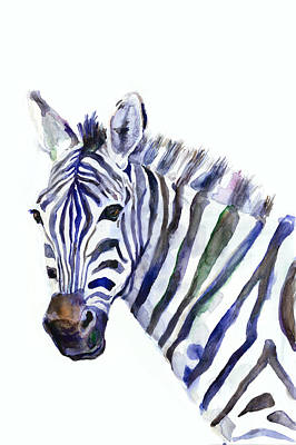 Watercolor Animals Drawing - Zebra by Dim Dom