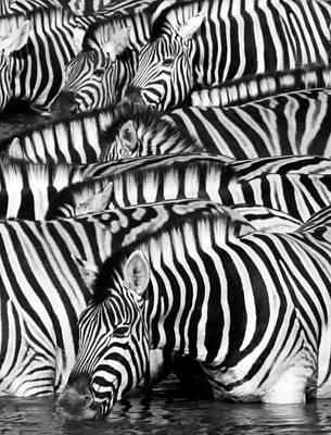 Kenya Digital Art - Zebra Drinking - Black And White by Nancy D Hall