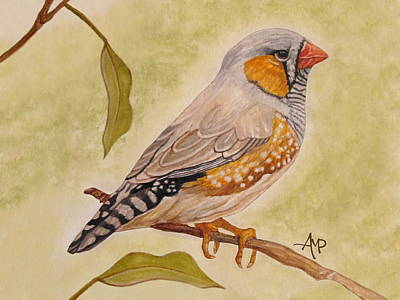 Finch Painting - Zebra Finch Watercolor by Angeles M Pomata
