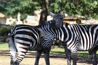 Photograph - Zebra Friends by Brenda Thour