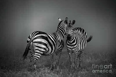Photograph - Zebra Gossip by Charuhas Images