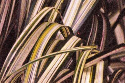 Photograph - Zebra Grass by Buddy Scott