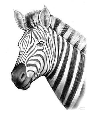 Animals Drawings - Zebra by Greg Joens