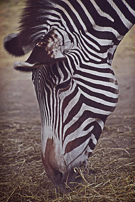 Digital Art - Zebra Head by Mihaela Pater