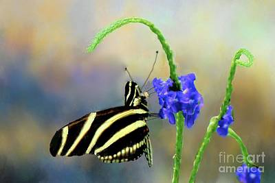 Photograph - Zebra Heliconius Butterfly  by Janette Boyd