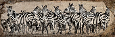 Photograph - Zebra Herd Rock Texture Blend Wide by Mike Gaudaur