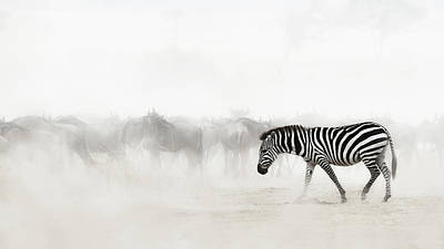 Photograph - Zebra In Dust Of Africa by Susan Schmitz