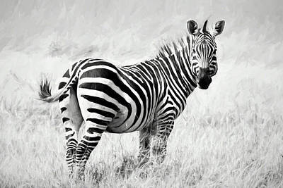 Digital Art - Zebra In The African Savanna by Pravine Chester