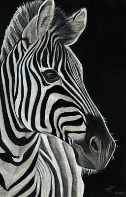 Zebra Drawing - Zebra  by Kyla Heumann