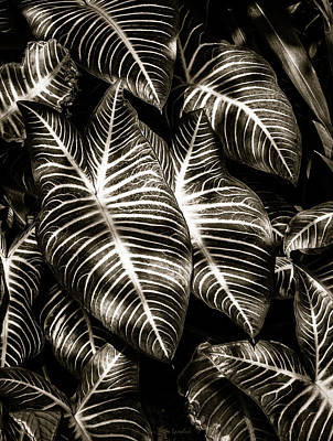 Photograph - Zebra Leaves by Wim Lanclus