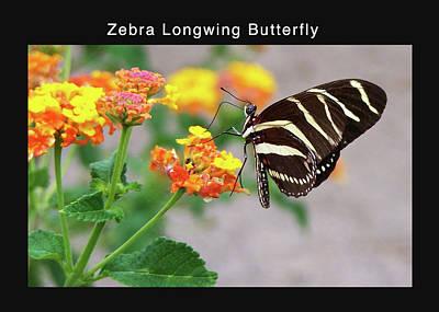 Vintage Chevrolet - Zebra Longwing Butterfly by Kathleen J Beller