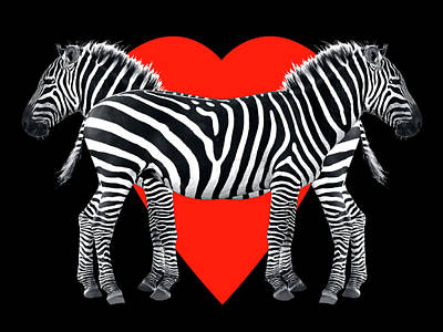 Love Photograph - Zebra Love by Gill Billington