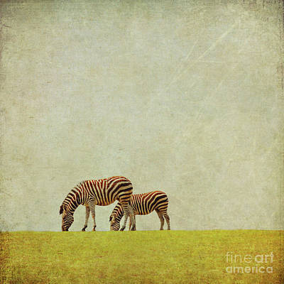 Zebra Art Print by Lyn Randle