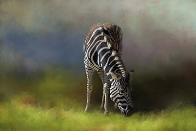 Photograph - Zebra by Michele Wright