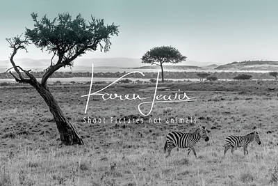 Photograph - Zebra Mother And Child On The Mara by Karen Lewis